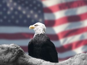 291562_eagle_and_american_flag